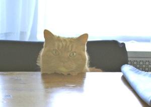 mish-at-table