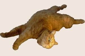mish-yoga-master