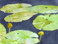 Waterlilies 2