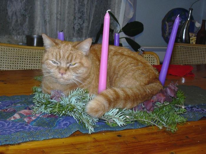 advent-cat