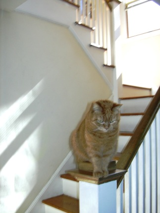 stair-sitter