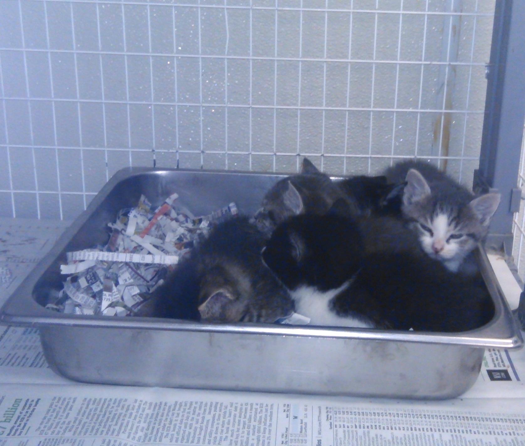 Five fluffy kitties