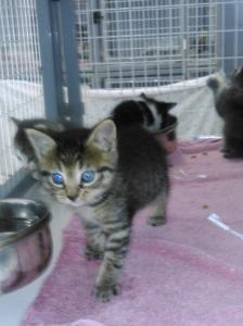 Kitty May,17
